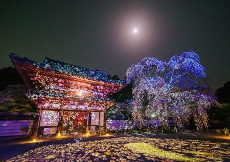 天野山金剛寺 落慶祭「光の切り絵」
